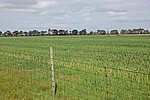 Picture of B Newleigh Sub-Division, Munglinup