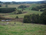 Picture of 22 Old Main Road, Beech Forest