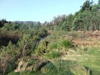 Picture of Lot 1 Upper Scamander Road, Upper Scamander