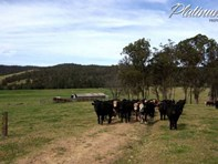 Picture of 347 Nerrigundah Mountain Road-Stockyard Farm, Bodalla