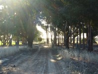 Picture of Lot 7 Teale Road, Monjingup
