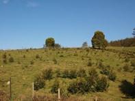 Picture of 78 Bramichs Road, Acacia Hills