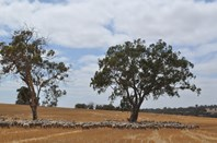 Picture of . Wandarin, Boyacup Road, Frankland