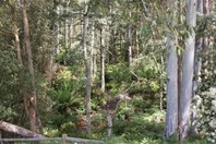 Picture of 0 Mersey Forest Road, Mole Creek