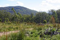 Picture of 186 Mountain Road, Lilydale
