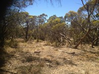 Picture of LOT 305 Mallee Highway, Peake