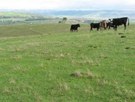 Picture of Lot 30 Forktree Road, Myponga
