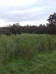 Picture of Lot 501 Pechey Road, Jane Brook