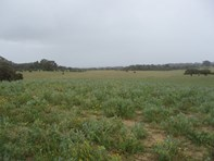 Picture of Lot 250 Nabaroo Road, Cowalla