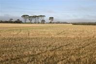 Picture of Williams Kondinin Road, Wickepin