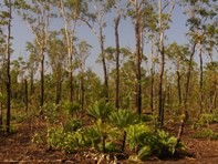 Picture of Lot 7092 Compigne Rd, Girraween