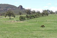 Main photo of Thompsons Creek Road, Scone - More Details