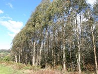 Picture of - West Maurice Road, Ringarooma