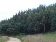 Picture of - Cuckoo Hill Road, Ringarooma