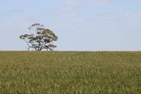 Picture of Wongan Hills