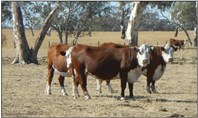 Picture of Various Lots Off Naracoorte Rd, Bordertown