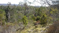 Picture of 85 Red Hill Rd, Scott Creek