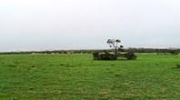 Picture of Koorda