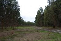 Picture of Lot 23 Morande Road, Narrikup