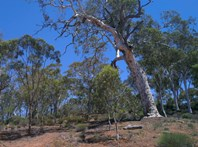 Picture of 325 Coondle West Road, Coondle