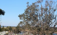 Picture of 32 McIntosh Road, Shoalhaven Heads