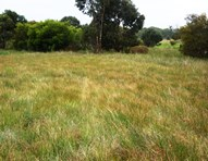 Picture of Lot 35 Cadogan Street, Currency Creek