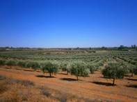 Picture of Lot 21 Carter Road, Waikerie