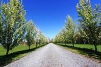 Picture of 692 Rowella Road, Rowella