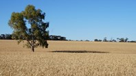 Picture of 75 Dalgouring – Snake Soak Rd, Beacon