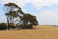 Picture of Newdegate