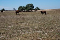 Picture of Dongara