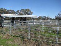 Picture of Guyra