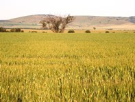 Picture of * 57.45ha Patto's 142acs, Bumbunga