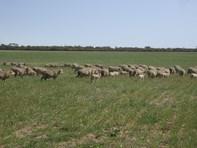 Picture of Farm Goodlands, Goodlands
