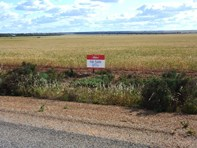 Picture of Lot 100 Koorda-Mollerin Rd, Koorda