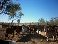 """Picture of 0 """"Cliffdale Station"""" """"Hells Gate Roadhouse"""", Burketown"""