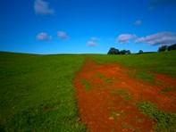 Picture of Browns Farm Black Rock Road, Yarloop