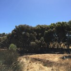 Picture of Lot 106 Moramockining Road, Wandering