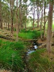 Picture of Lot 3 Halleys Road, Nannup