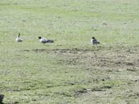 Picture of Lot 23 The Meadows Bonnett Park Drive, Goulburn