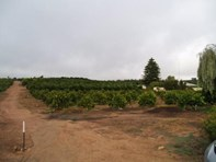 Picture of 2 Allotments, Waikerie