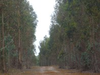 Picture of Lot 23 Morande Road, Mount Barker