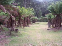 Photo of 52 Ten Foot Track, Preolenna - More Details