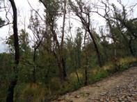 Picture of 27-29 Salisbury Avenue, Mount Victoria