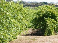 Picture of Lot 300 Little Road, Willunga