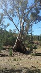 "Picture of ""Black Hill"" Warcowie Road, Hawker"