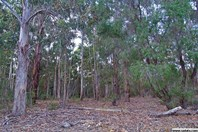 Picture of Lots 2,3 & 5 Commonage Road, Quindalup