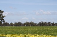 Picture of 'Vincents' Koppamurra via, Naracoorte