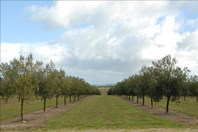 Picture of Lot 4 Finniss Park Road, Currency Creek
