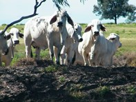 Picture of 706 Healy's Crossing Road, Brigalow